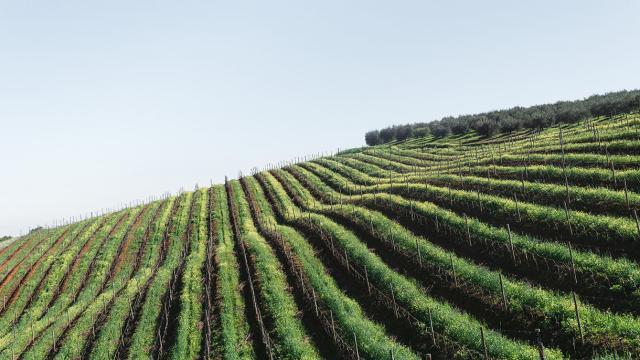 vinícolas africa do sul