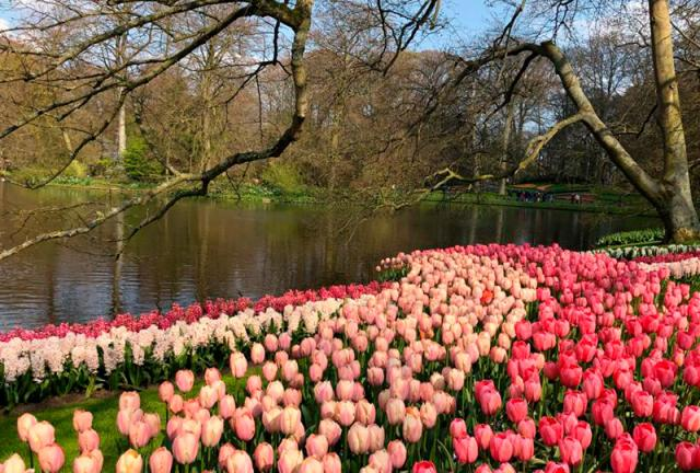 parque Keukenhof Holanda Europa