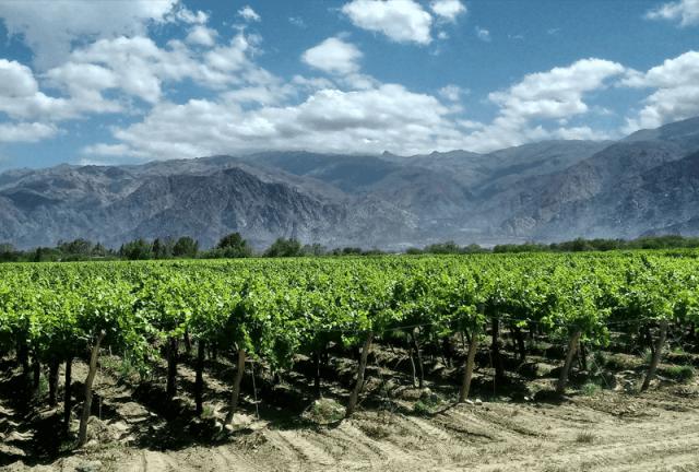 vinícola mendoza e salta