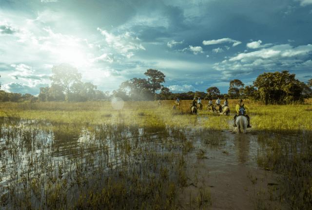 destino dos sonhos pantanal brasil