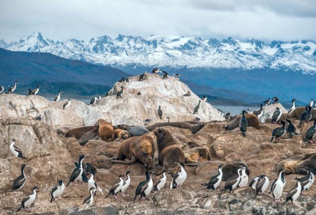cormorões leões marinhos patagônia