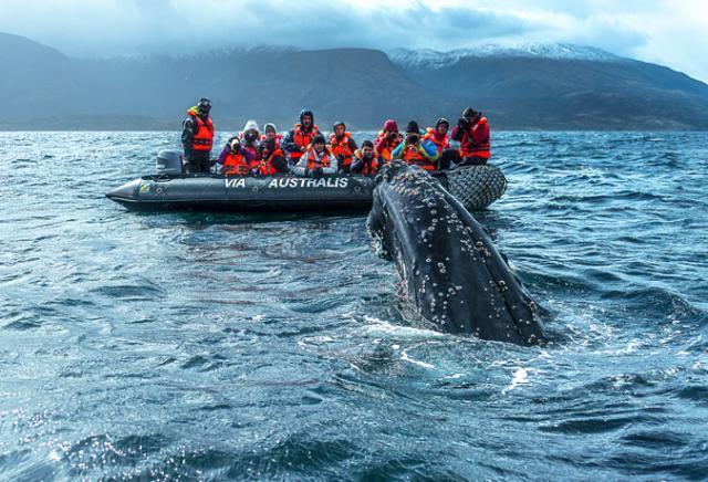 Vida marinha na Patagônia