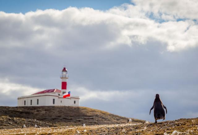 Pinguim no estreito de Magalhães