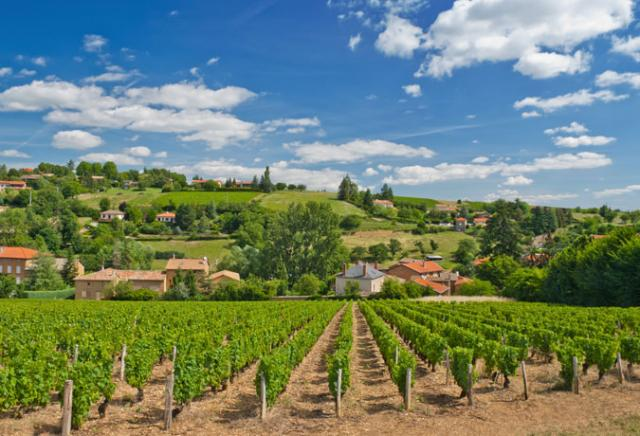 vinícola provence frança