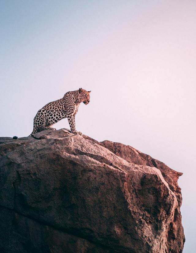 safari fim de tarde