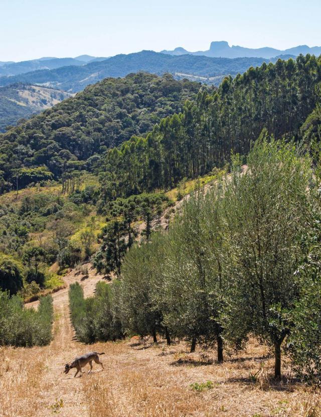 Fazenda do Campo Alto Serra da Mantiqueira