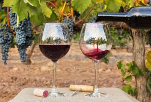 degustação vinho andaluzia